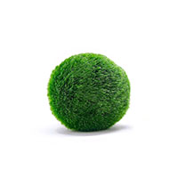 Best Toys for Betta Fish Marimo Moss Balls