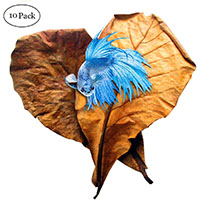 Best Toys for Betta Fish SunGrow Betta Catappa Leaves