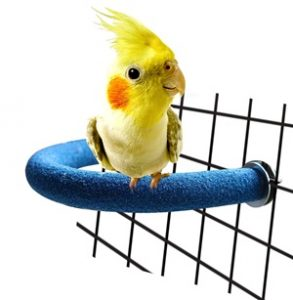 Rypet Natural Bird Cage Toys