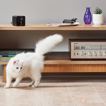 Cat chasing Petcube Play's laser pointer